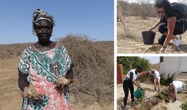 Montage plantation graines de rônier