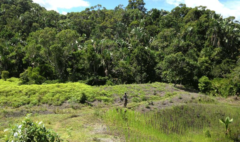 Riziculture sur la forêt et jachères alternatives