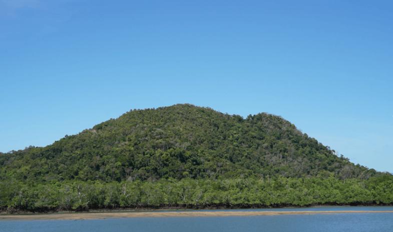 Forêt à Madagascar